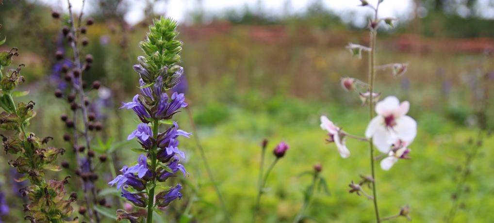 Een tuin met biodiversiteit