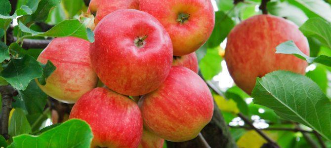 Gevulde appelen met vanillesaus