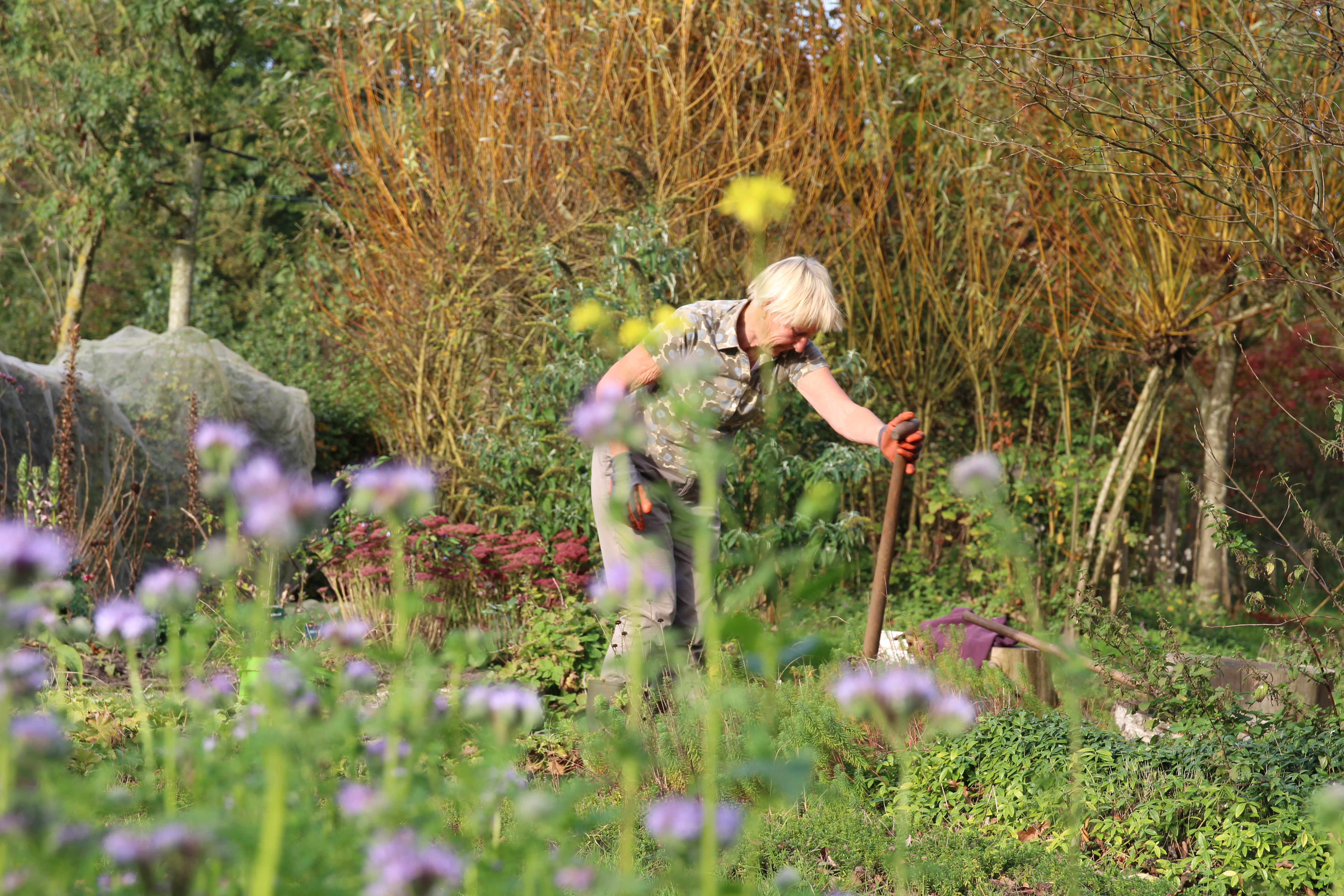 vrijwilligster in de tuin