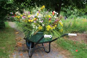 kruiwagen met wilde bloemen